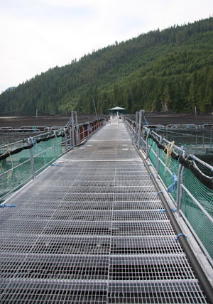 A salmon farm in B.C.