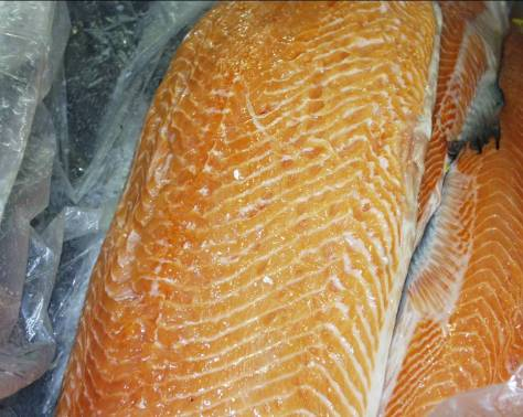 Kudoa in Atlantic salmon fillet