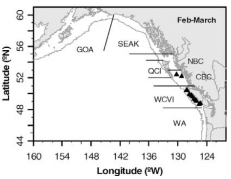 Harrison River sockeye have been found to winter on the West Coast of Vancouver Island (black triangles note location where they were found) while they are still juveniles. They appear to be co-existing very well with the approximately 30 salmon farms from Quatsino Sound south to Alberni Inlet.