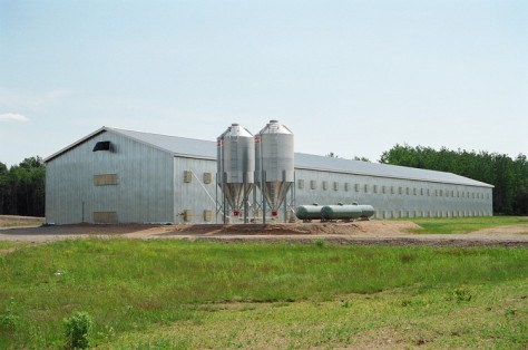 FV_chicken_barn