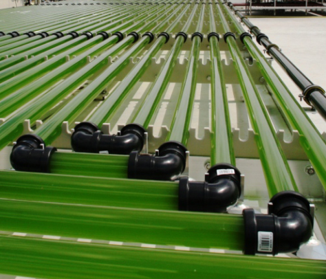 Algae growing in pipes fed by carbon dioxide.